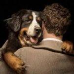 Benestar Animal: Infografía