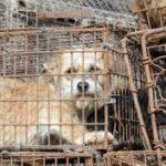 Posición da Federación Veterinaria Europea fronte aos problemas co comercio dos cans